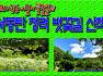 우리가 걷는 이길이 꽃길일세 서동탄 청려벗꽃길 3동서 부부 산책