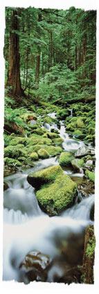 """『 이는 그 보좌 가운데 계신 어린양이 그들을 먹이시고 생수의 샘들로 인도하시며, 하나님께서 그들의 눈에서 모든 눈물을 씻어 주실 것이기 때문이라.""""고 하더라. ─ For the Lamb which is in the midst of the throne shall feed them, and shall lead them unto living fountains of waters: and God shall wipe away all tears from their eyes. 』(요한계시록 7:17)"""