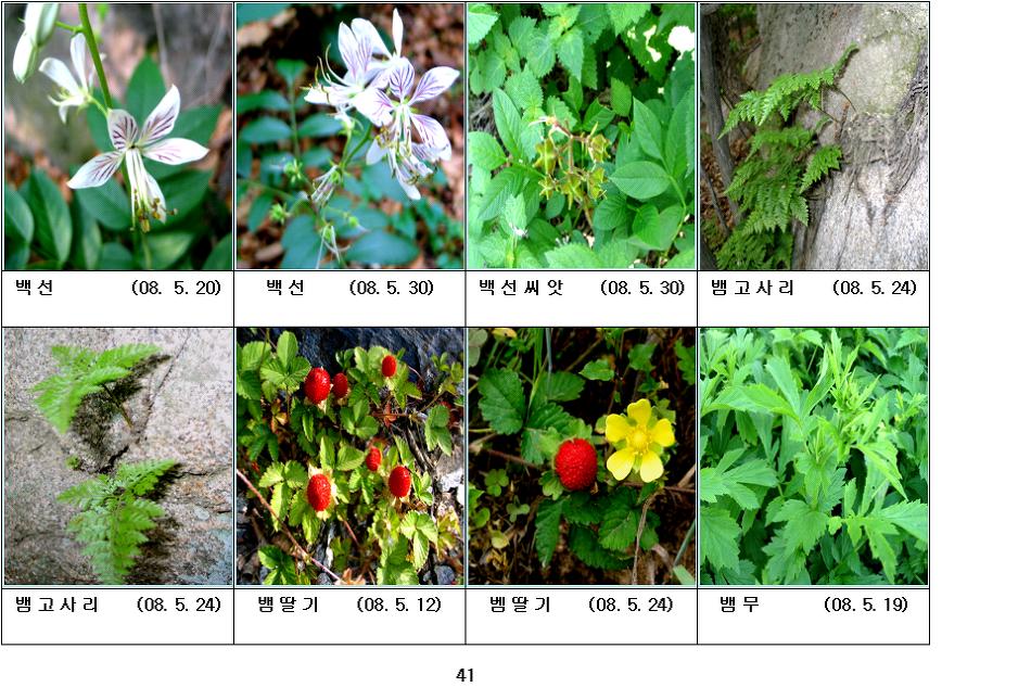 봄에 피는 야생화(5월-11)