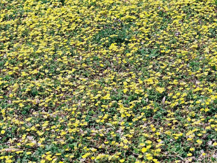 그냥> 봄꽃 사진 몇장과 잡생각...100505